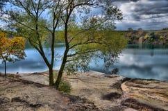 Árbol cerca del agua Fotografía de archivo libre de regalías