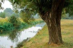 Árbol cerca del agua del río Imagenes de archivo