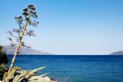 Árbol cerca del mar en la isla del kefalonia Foto de archivo libre de regalías