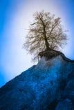 Árbol cerca del profundo Imagenes de archivo