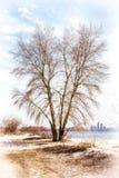 Árbol cerca del río de Dnieper en invierno Imágenes de archivo libres de regalías
