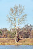 Árbol cerca del río de Dnieper en otoño Fotografía de archivo