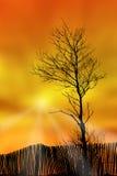 Árbol, cerca y puesta del sol Imágenes de archivo libres de regalías