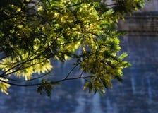 Árbol chino delante de los monumentos Foto de archivo