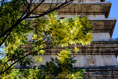 Árbol chino delante de los monumentos Imagen de archivo