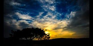 Árbol Chipre (4K) de la puesta del sol del lapso de tiempo almacen de video