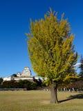 Árbol coloreado amarillo del gingko con el castillo de Himeji en el fondo fotografía de archivo libre de regalías