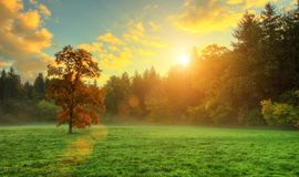 Árbol coloreado de oro hermoso del otoño en prado imagen de archivo