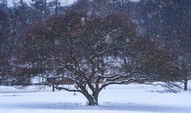 Árbol coloreado hermoso en nevadas Imagen de archivo libre de regalías