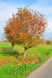 Árbol colorido cerca del camino Foto de archivo libre de regalías