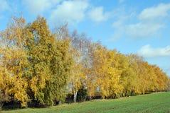 Árbol colorido del otoño Imágenes de archivo libres de regalías