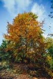 Árbol colorido del otoño Foto de archivo