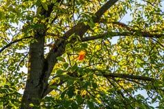 Árbol colorido en el otoño fotografía de archivo libre de regalías