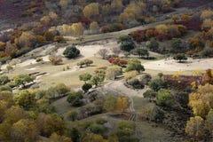Árbol colorido en la caída en la ladera Fotografía de archivo libre de regalías