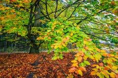 Árbol colorido hermoso del otoño en un bosque Foto de archivo
