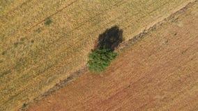 Árbol como referencia para la foto del abejón de las cosechas del cereal diferente fotos de archivo libres de regalías