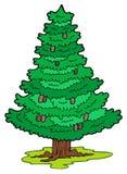 Árbol conífero de la historieta ilustración del vector