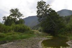Árbol conífero en las montañas Fotografía de archivo libre de regalías