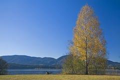 Árbol conífero en otoño Fotografía de archivo libre de regalías
