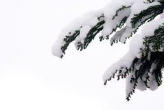 Árbol con capa gruesa de la nieve fotos de archivo