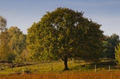 Árbol con colores del otoño Foto de archivo libre de regalías