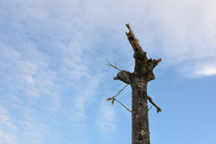 Árbol con cortado con el cielo nublado Fotos de archivo libres de regalías
