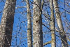 Árbol con el agujero de la pulsación de corriente Cielo azul en fondo foto de archivo