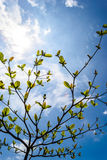 Árbol con el cielo azul Foto de archivo libre de regalías