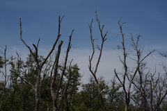 Árbol con el cielo azul de la nube Fotos de archivo