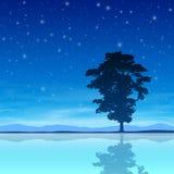 Árbol con el cielo nocturno libre illustration