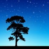 Árbol con el cielo nocturno stock de ilustración