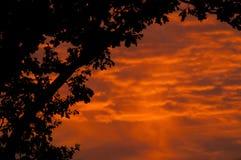 Árbol con el cielo rojo Imagen de archivo libre de regalías