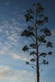 Árbol con el cielo y las nubes detrás Fotos de archivo