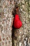 Árbol con el corazón Fotos de archivo