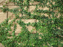 Árbol con el fondo de la pared de ladrillo Fotografía de archivo