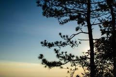 Árbol con el fondo de la salida del sol Fotos de archivo