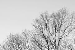 Árbol con el fondo gris del cielo Foto de archivo