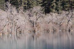 Árbol con el lago en invierno Fotos de archivo libres de regalías