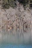 Árbol con el lago en invierno Fotografía de archivo libre de regalías