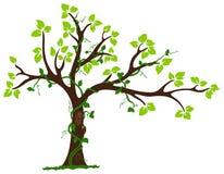 Árbol con el liana y la vid ilustración del vector