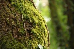 Árbol con el musgo Imagen de archivo