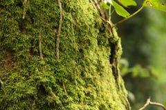 Árbol con el musgo Foto de archivo