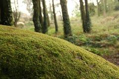 Árbol con el musgo Fotografía de archivo