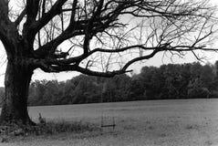 Árbol con el oscilación Foto de archivo libre de regalías