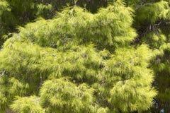 Árbol con el primer espinoso de las ramas foto de archivo libre de regalías