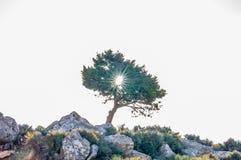 árbol con el sol dentro del árbol foto de archivo