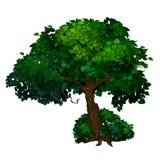 Árbol con el tronco torcido y la corona verde de hojas Fotos de archivo