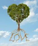 Árbol con follaje con la forma de un corazón y de raíces como texto Lo Fotografía de archivo libre de regalías