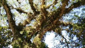 Árbol con follaje Follaje de la estafa de Arbol fotos de archivo