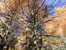 Árbol con la coloración de la hoja en las montañas fotografía de archivo libre de regalías
